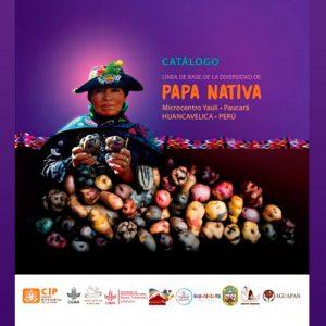 Línea de Base de la Diversidad de Papa Nativa – Huancavelica